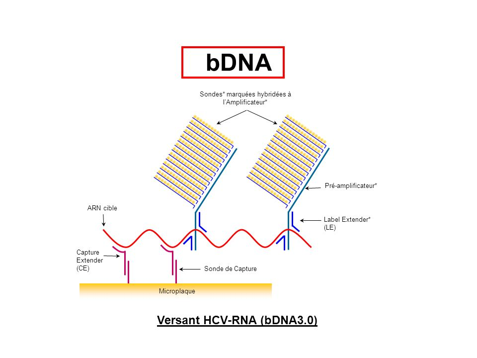 GeneLibrarian HBV Module: Genotyping report (1): Genotype séquence consensus la plus proche HBV genotype