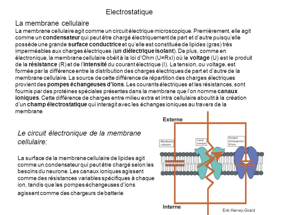 Electrostatique La membrane cellulaire La membrane cellulaire agit comme un circuit électrique microscopique. Premièrement, elle agit comme un condens