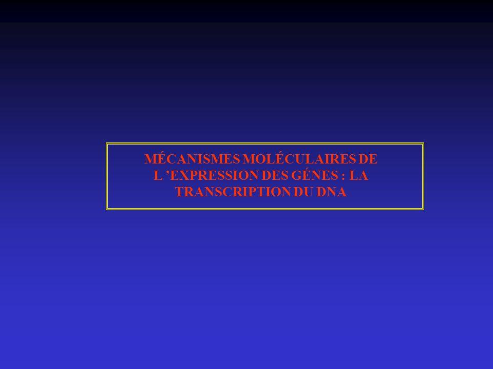 MÉCANISMES MOLÉCULAIRES DE L EXPRESSION DES GÉNES : LA TRANSCRIPTION DU DNA