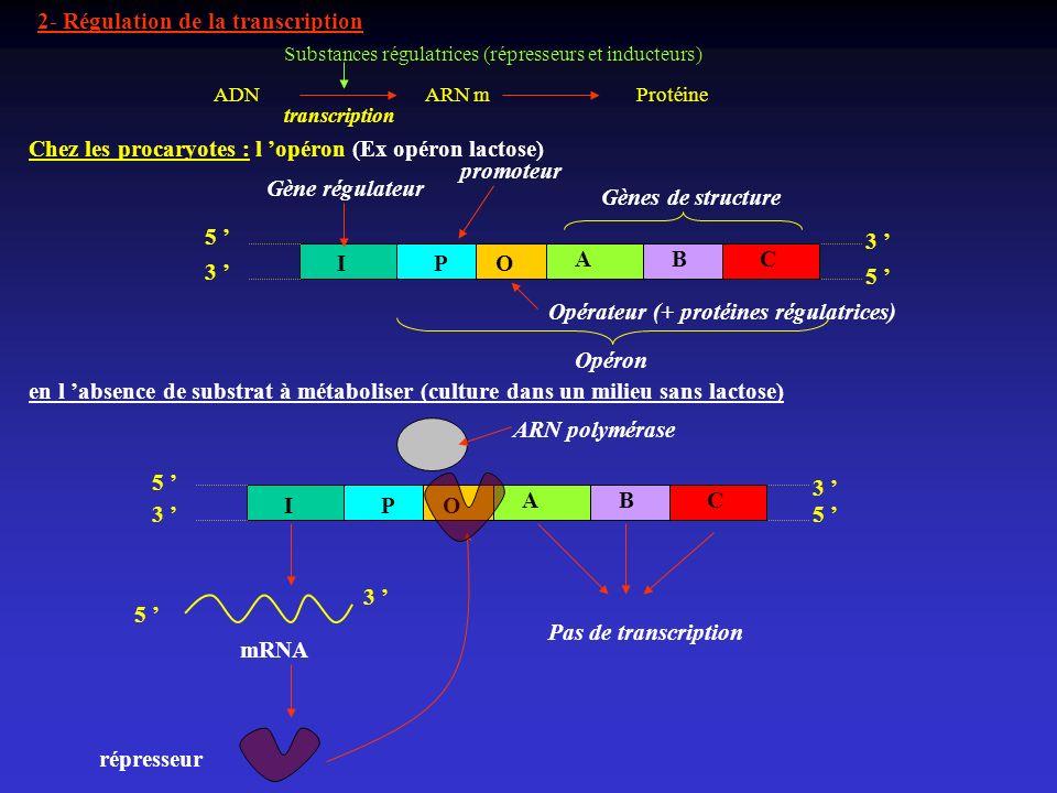 2- Régulation de la transcription 5 3 3 5 Chez les procaryotes : l opéron (Ex opéron lactose) Gène régulateur Opérateur (+ protéines régulatrices) IOP