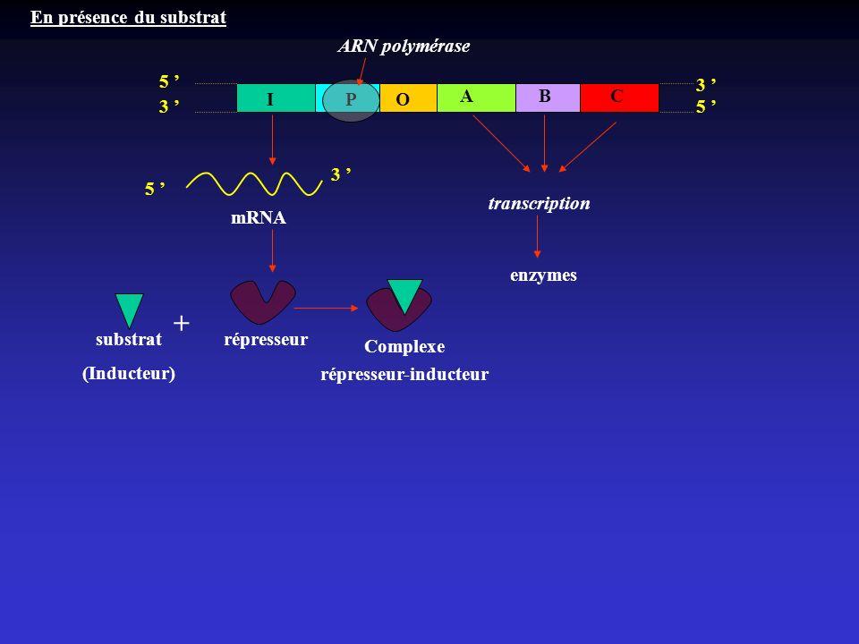 3 3 5 IOP ABC 5 5 3 mRNA répresseur transcription En présence du substrat enzymes substrat (Inducteur) + Complexe répresseur-inducteur ARN polymérase