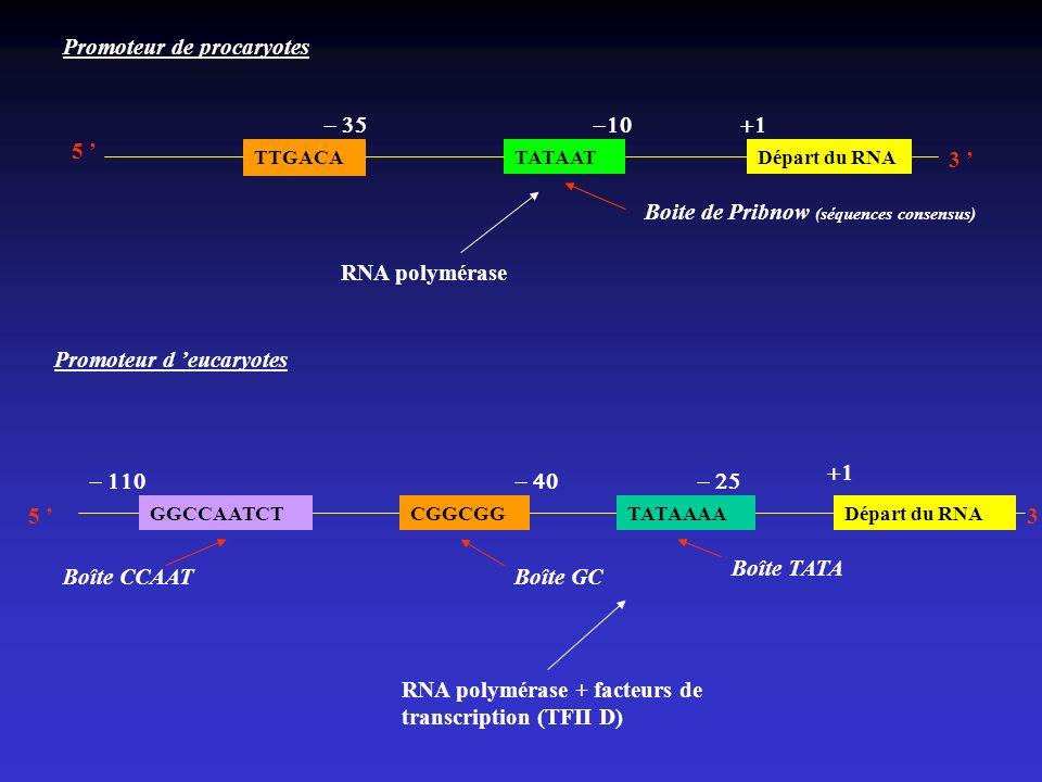 TTGACA TATAATDépart du RNA 5 3 Promoteur de procaryotes Boite de Pribnow (séquences consensus) Promoteur d eucaryotes Départ du RNA TATAAAA CGGCGGGGCC