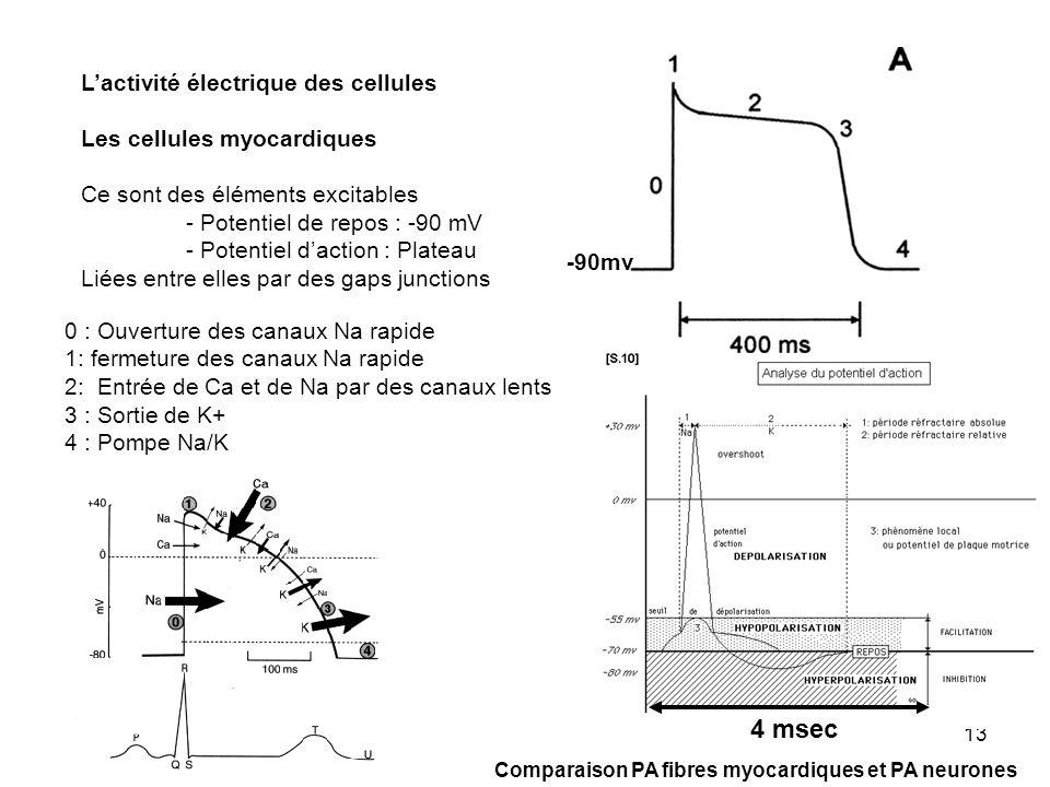 13 Lactivité électrique des cellules Les cellules myocardiques Ce sont des éléments excitables - Potentiel de repos : -90 mV - Potentiel daction : Pla