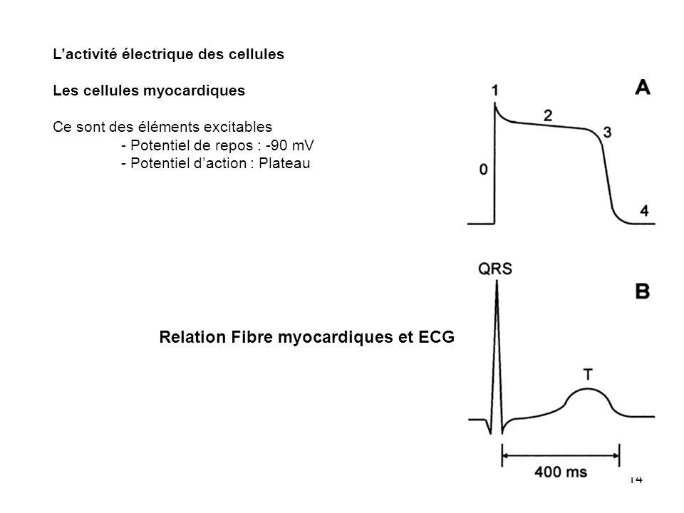 14 Lactivité électrique des cellules Les cellules myocardiques Ce sont des éléments excitables - Potentiel de repos : -90 mV - Potentiel daction : Pla