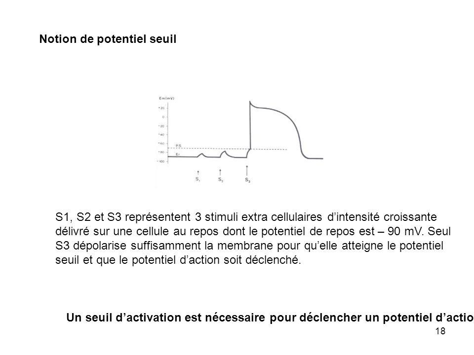 18 Notion de potentiel seuil Un seuil dactivation est nécessaire pour déclencher un potentiel daction S1, S2 et S3 représentent 3 stimuli extra cellul