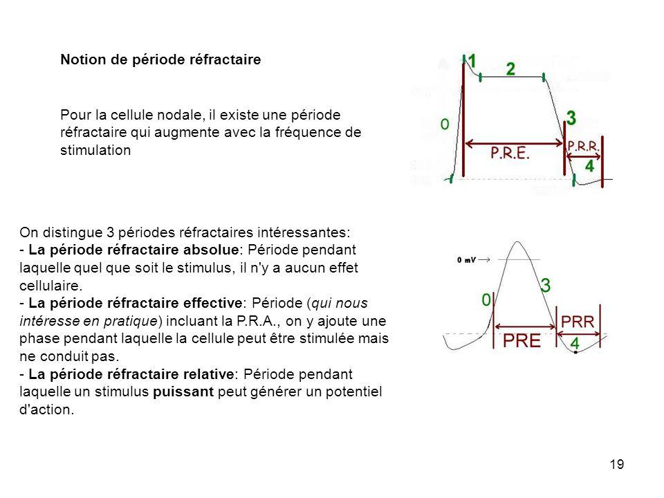 19 Notion de période réfractaire Pour la cellule nodale, il existe une période réfractaire qui augmente avec la fréquence de stimulation On distingue