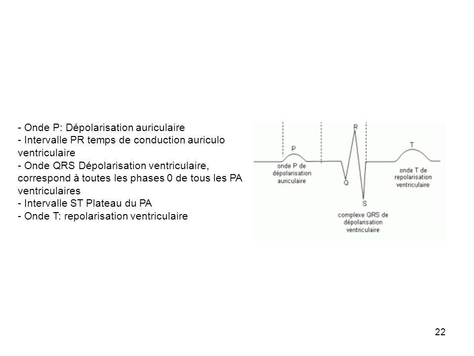 22 - Onde P: Dépolarisation auriculaire - Intervalle PR temps de conduction auriculo ventriculaire - Onde QRS Dépolarisation ventriculaire, correspond