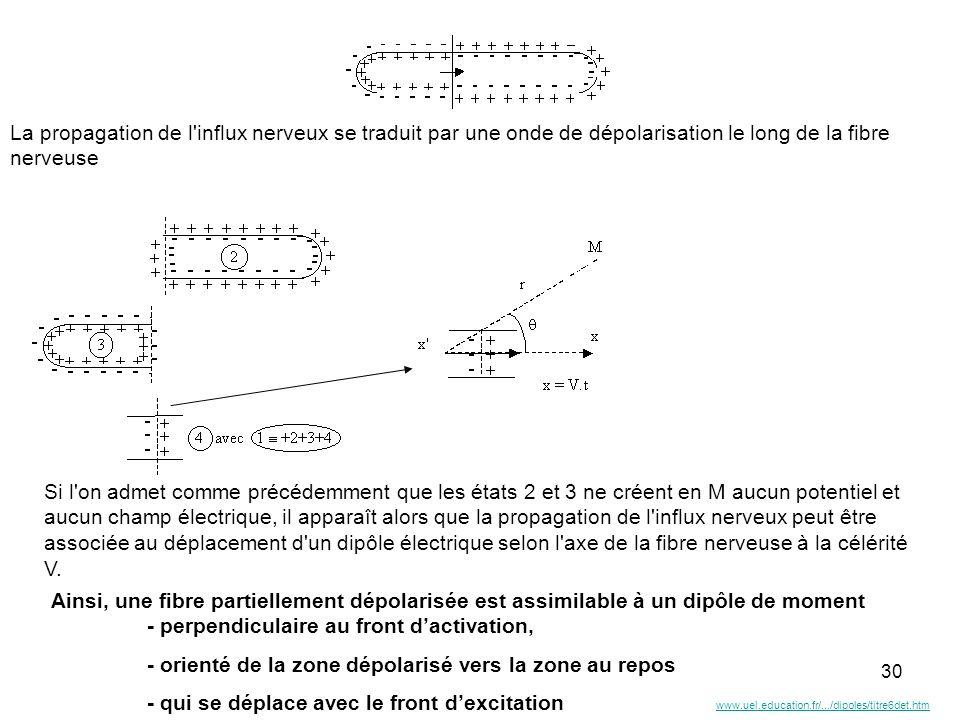30 Ainsi, une fibre partiellement dépolarisée est assimilable à un dipôle de moment - perpendiculaire au front dactivation, - orienté de la zone dépol