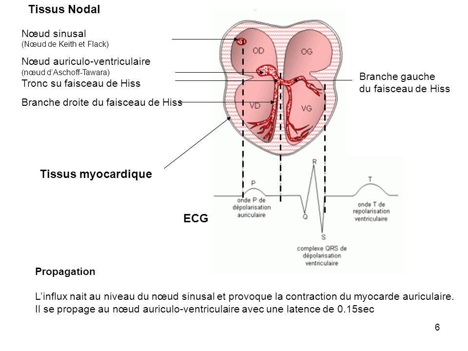 7 Nœud sinusal (Nœud de Keith et Flack) Nœud auriculo-ventriculaire (nœud dAschoff-Tawara) Tronc du faisceau de Hiss Branche droite du faisceau de Hiss Branche gauche du faisceau de Hiss Tissus myocardique Tissus Nodal ECG Propagation (suite) Il se propage au tronc du faisceau de Hiss puis dans ses branches puis au niveau des cellules du myocarde ventriculaire par le réseau de purkinje.