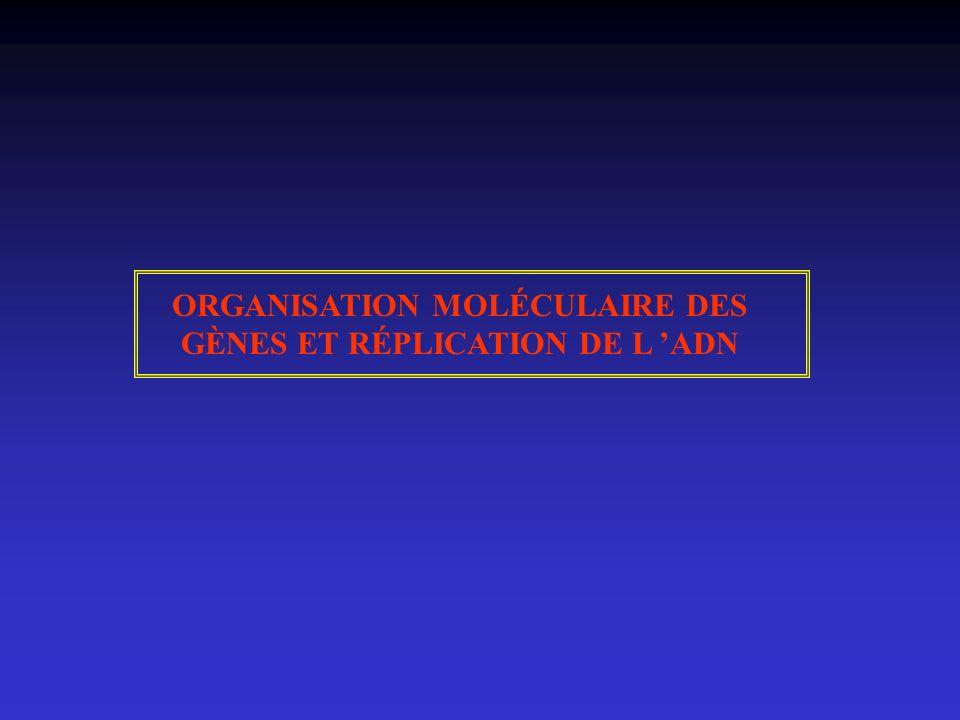 ORGANISATION MOLÉCULAIRE DES GÈNES ET RÉPLICATION DE L ADN