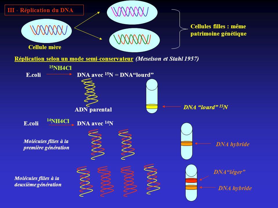 III - Réplication du DNA Cellule mère Cellules filles : même patrimoine génétique Réplication selon un mode semi-conservateur (Meselson et Stahl 1957)