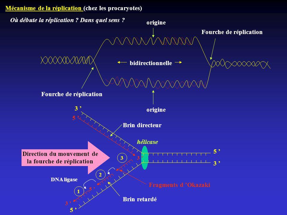 Mécanisme de la réplication (chez les procaryotes) origine Fourche de réplication bidirectionnelle Où débute la réplication ? Dans quel sens ? 5 3 5 3