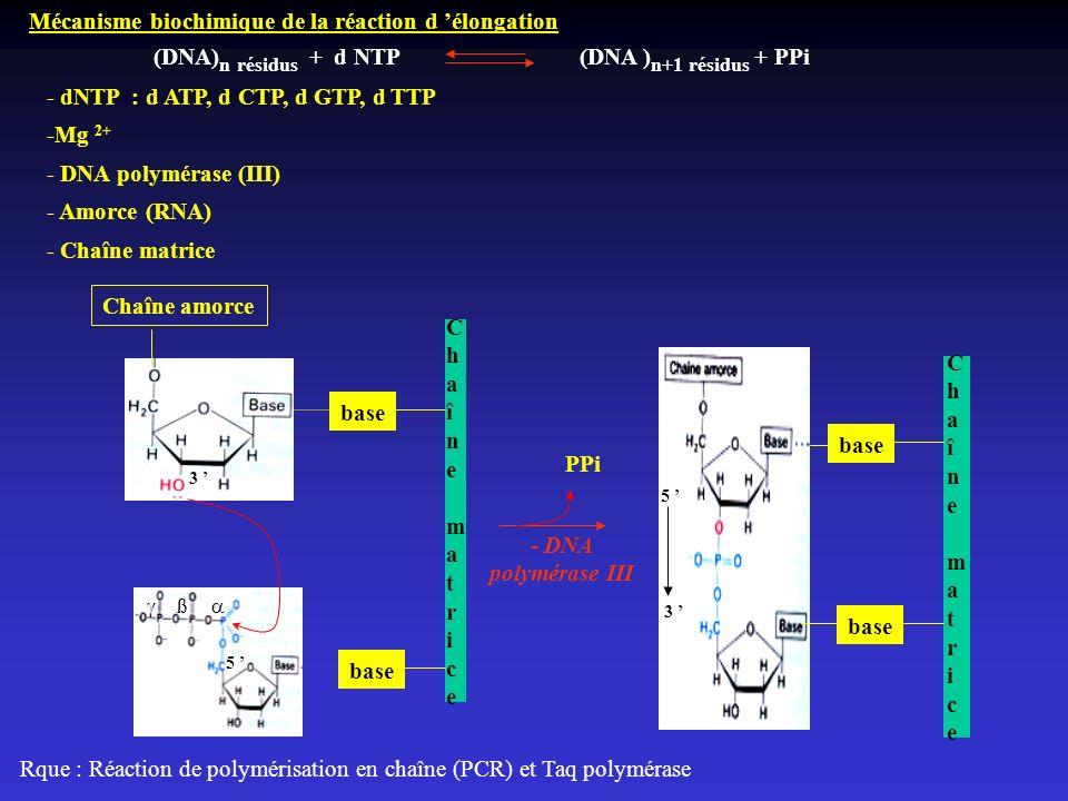 Mécanisme biochimique de la réaction d élongation Chaîne amorce ß Chaîne matriceChaîne matrice base PPi Chaîne matriceChaîne matrice base (DNA) n rési