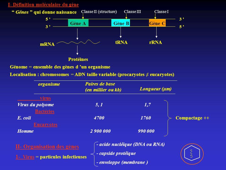 I- Définition moléculaire du gène Gène AGène BGène C 5 3 3 5 mRNA tRNArRNA Protéines Génos qui donne naissance Génome = ensemble des gènes d un organi