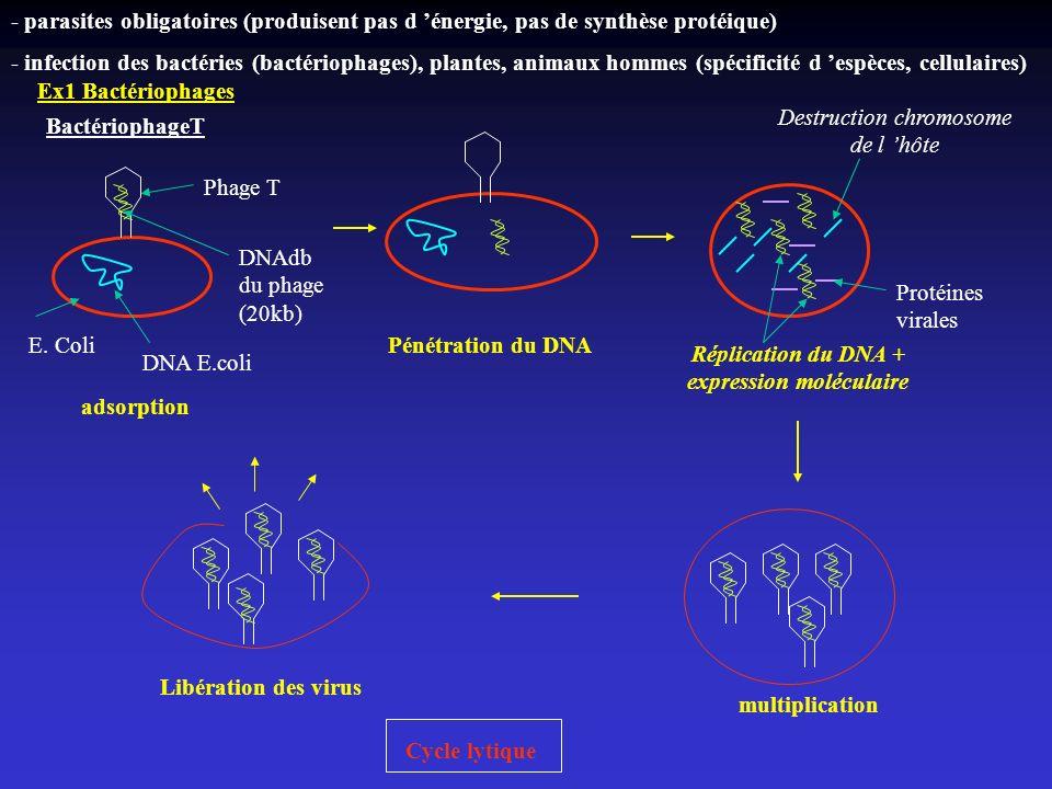 - parasites obligatoires (produisent pas d énergie, pas de synthèse protéique) - infection des bactéries (bactériophages), plantes, animaux hommes (sp