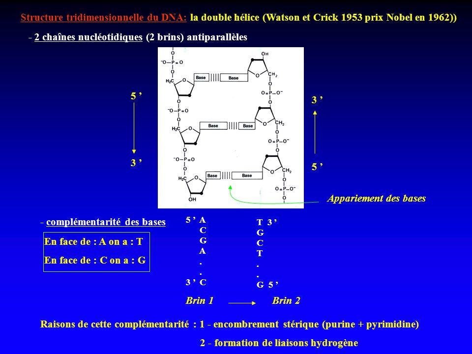 Structure tridimensionnelle du DNA: la double hélice (Watson et Crick 1953 prix Nobel en 1962)) - 2 chaînes nucléotidiques (2 brins) antiparallèles 5