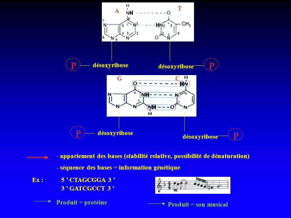 A T désoxyribose P P P P GC - appariement des bases (stabilité relative, possibilité de dénaturation) - séquence des bases = information génétique Ex
