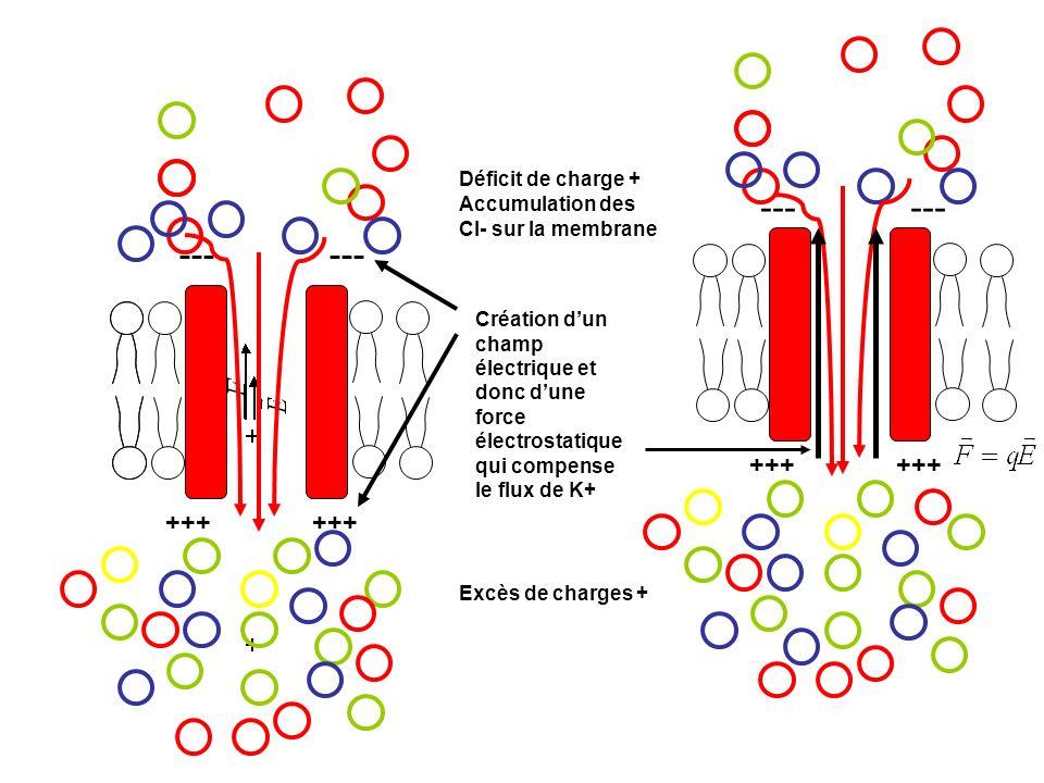 --- +++ +++ Déficit de charge + Excès de charges + --- +++ +++ Création dun champ électrique et donc dune force électrostatique qui compense le flux d