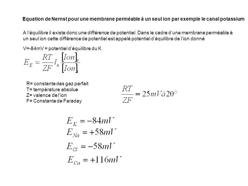 Equation de Nernst pour une membrane perméable à un seul ion par exemple le canal potassium V=-84mV = potentiel déquilibre du K R= constante des gaz p