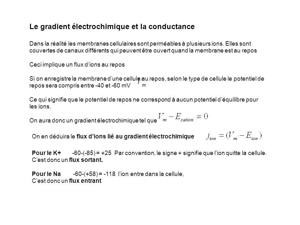 Le gradient électrochimique et la conductance Dans la réalité les membranes cellulaires sont perméables à plusieurs ions. Elles sont couvertes de cana