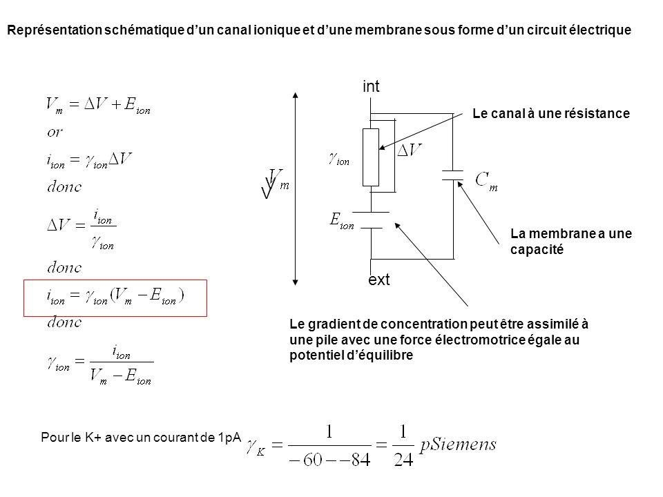 Représentation schématique dun canal ionique et dune membrane sous forme dun circuit électrique int ext V V Pour le K+ avec un courant de 1pA Le gradi