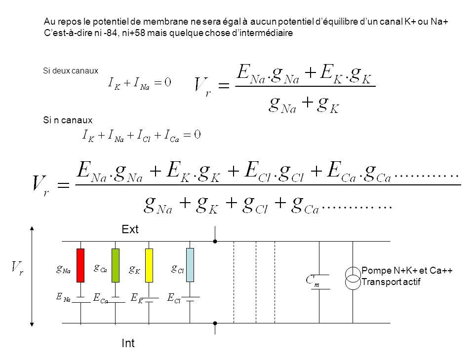 Au repos le potentiel de membrane ne sera égal à aucun potentiel déquilibre dun canal K+ ou Na+ Cest-à-dire ni -84, ni+58 mais quelque chose dinterméd