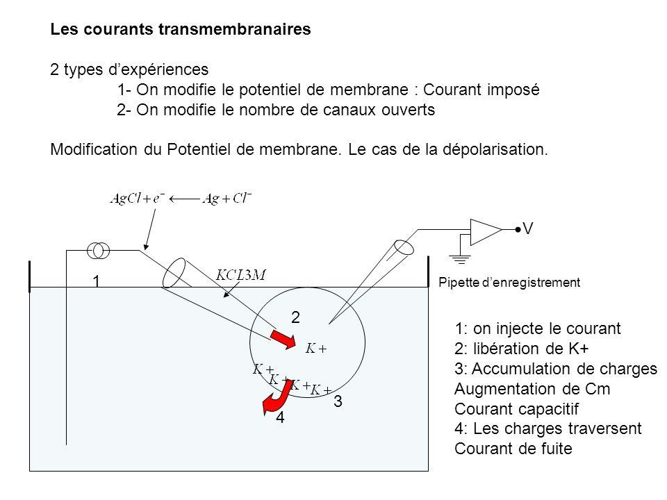 Les courants transmembranaires 2 types dexpériences 1- On modifie le potentiel de membrane : Courant imposé 2- On modifie le nombre de canaux ouverts