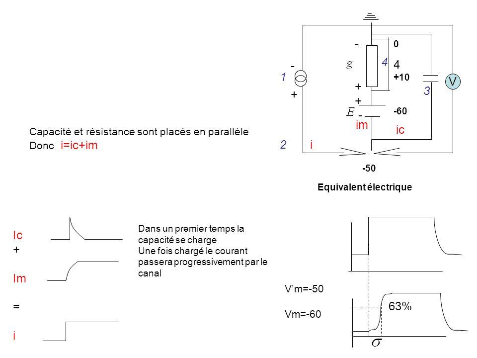 Vm=-50 Vm=-60 V -+-+ - + - 0 +10 -60 -50 1 2 3 4 4 Equivalent électrique i ic im Capacité et résistance sont placés en parallèle Donc i=ic+im Ic + Im