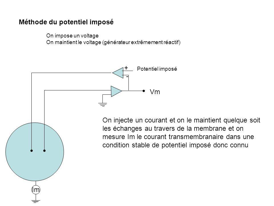 Méthode du potentiel imposé On impose un voltage On maintient le voltage (générateur extrêmement réactif) + - Vm Potentiel imposé On injecte un couran
