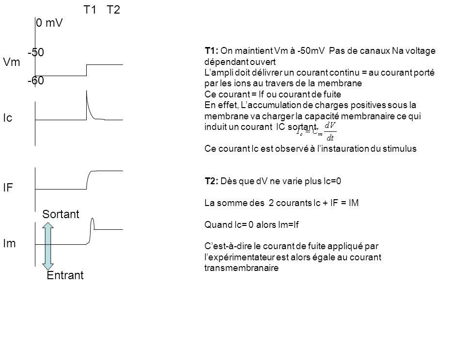 -50 -60 Vm Ic IF Im T1: On maintient Vm à -50mV Pas de canaux Na voltage dépendant ouvert Lampli doit délivrer un courant continu = au courant porté p