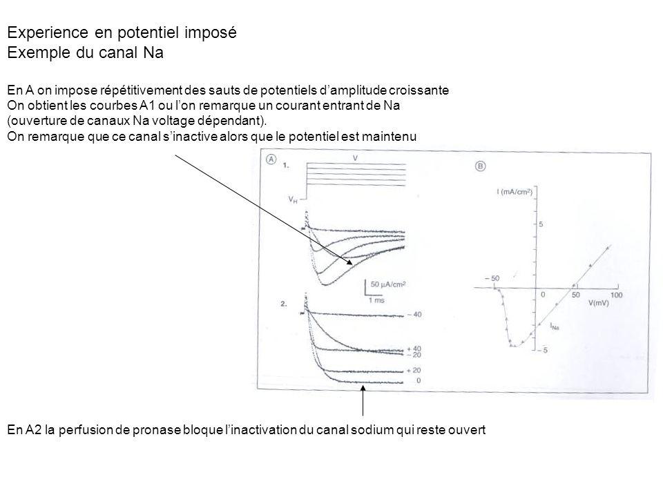 Experience en potentiel imposé Exemple du canal Na En A on impose répétitivement des sauts de potentiels damplitude croissante On obtient les courbes