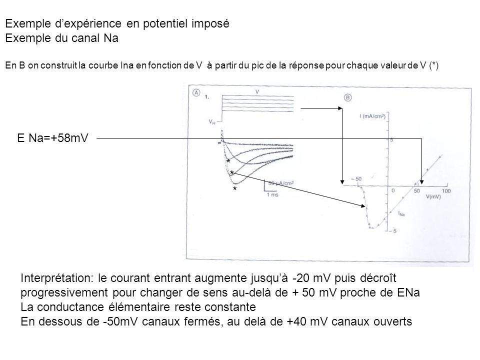 * * * Interprétation: le courant entrant augmente jusquà -20 mV puis décroît progressivement pour changer de sens au-delà de + 50 mV proche de ENa La