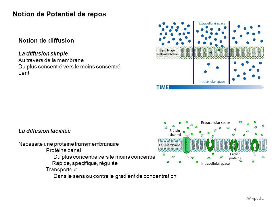 Diffusion Facilitée Considérons une membrane bicouche lipidiques K+ Na+ Ca++ Cl- 0 mV Int EXT