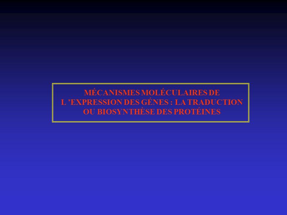 MÉCANISMES MOLÉCULAIRES DE L EXPRESSION DES GÉNES : LA TRADUCTION OU BIOSYNTHÈSE DES PROTÉINES