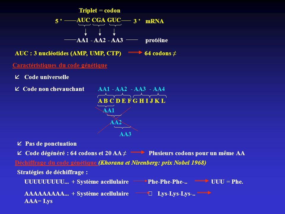 AUC CGA GUC 5 3 mRNA AA1 - AA2 - AA3protéine Triplet = codon AUC : 3 nucléotides (AMP, UMP, CTP) 64 codons Caractéristiques du code génétique å Code u