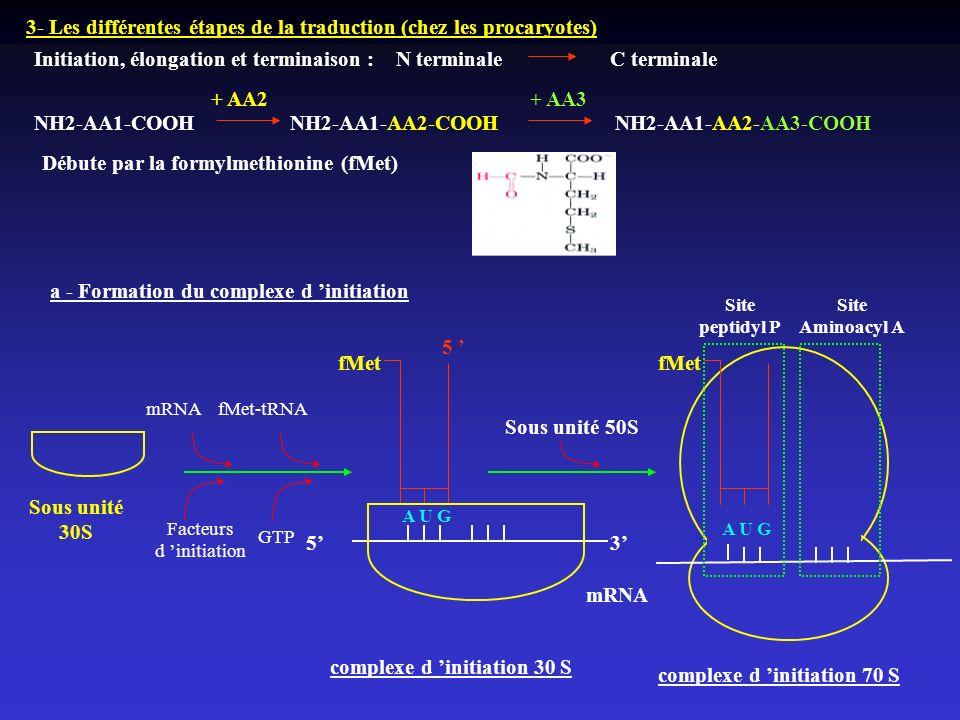 3- Les différentes étapes de la traduction (chez les procaryotes) Initiation, élongation et terminaison : N terminaleC terminale A U G fMet 53 5 mRNA