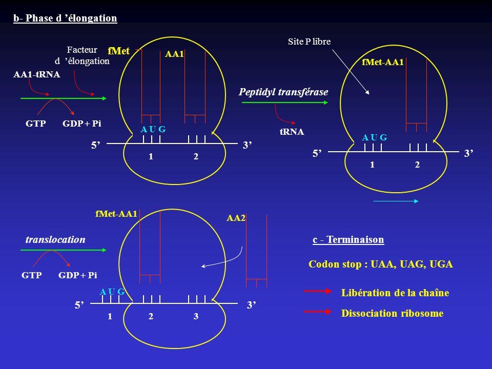 A U G fMet b- Phase d élongation AA1 53 AA1-tRNA Facteur d élongation GTPGDP + Pi A U G fMet-AA1 53 Peptidyl transférase tRNA fMet-AA1 translocation 1