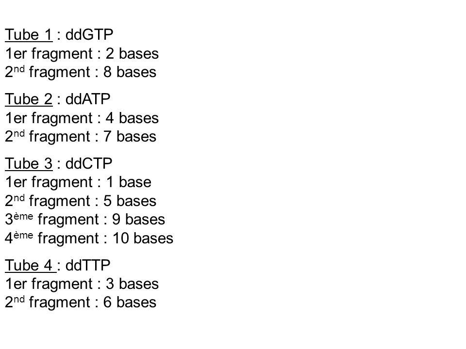 Tube 1 : ddGTP 1er fragment : 2 bases 2 nd fragment : 8 bases Tube 2 : ddATP 1er fragment : 4 bases 2 nd fragment : 7 bases Tube 3 : ddCTP 1er fragmen