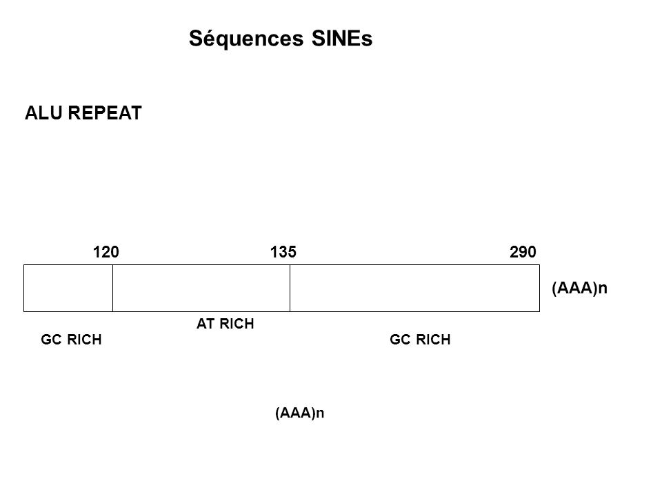 Séquences SINEs ALU REPEAT 120135290 (AAA)n AT RICH GC RICH (AAA)n
