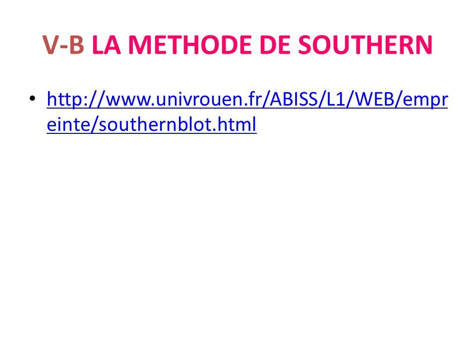 V-B LA METHODE DE SOUTHERN http://www.univrouen.fr/ABISS/L1/WEB/empr einte/southernblot.html http://www.univrouen.fr/ABISS/L1/WEB/empr einte/southernb