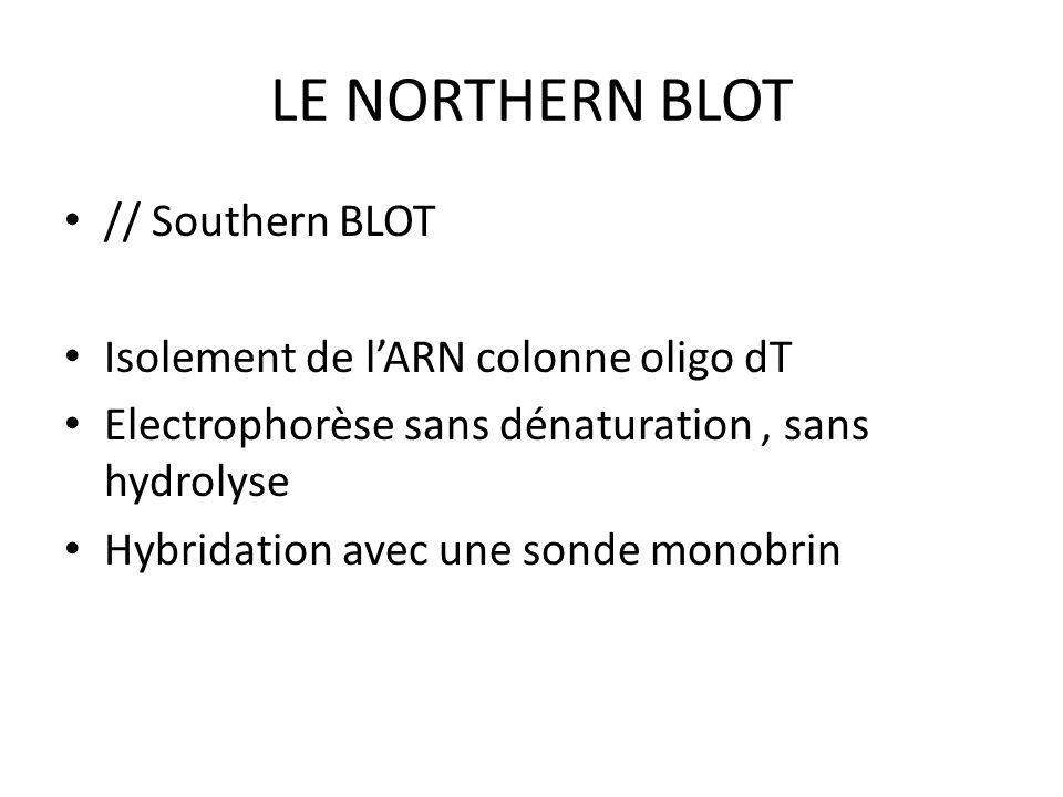 LE NORTHERN BLOT // Southern BLOT Isolement de lARN colonne oligo dT Electrophorèse sans dénaturation, sans hydrolyse Hybridation avec une sonde monob