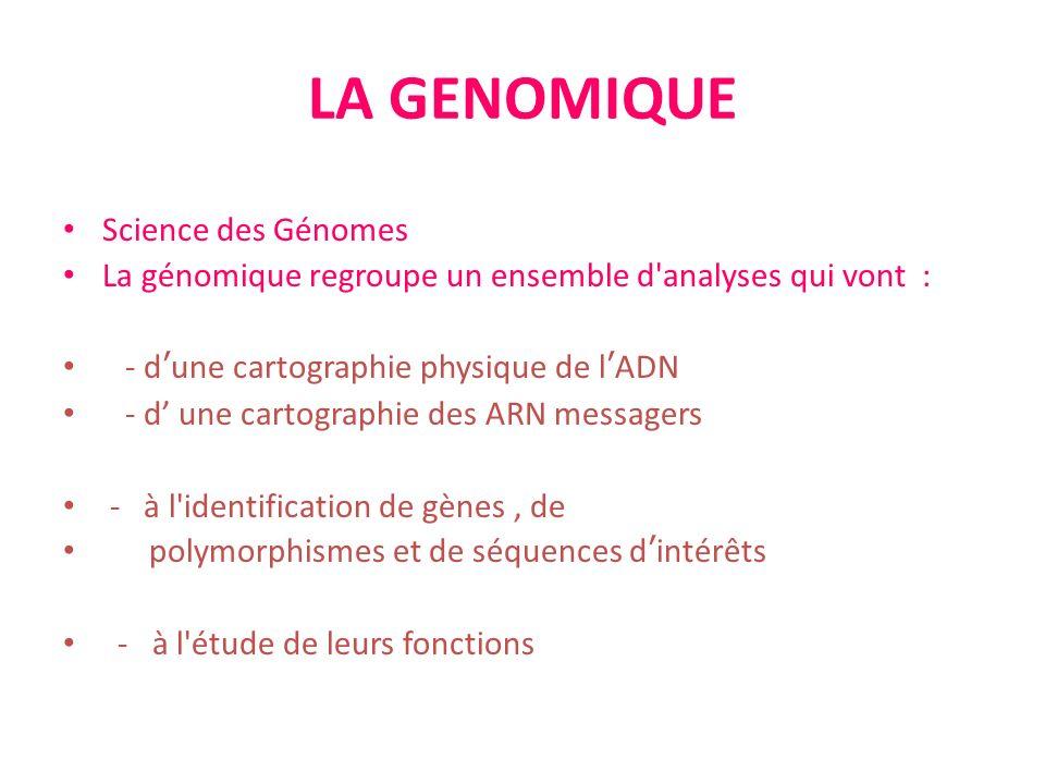 LA GENOMIQUE Science des Génomes La génomique regroupe un ensemble d'analyses qui vont : - dune cartographie physique de lADN - d une cartographie des