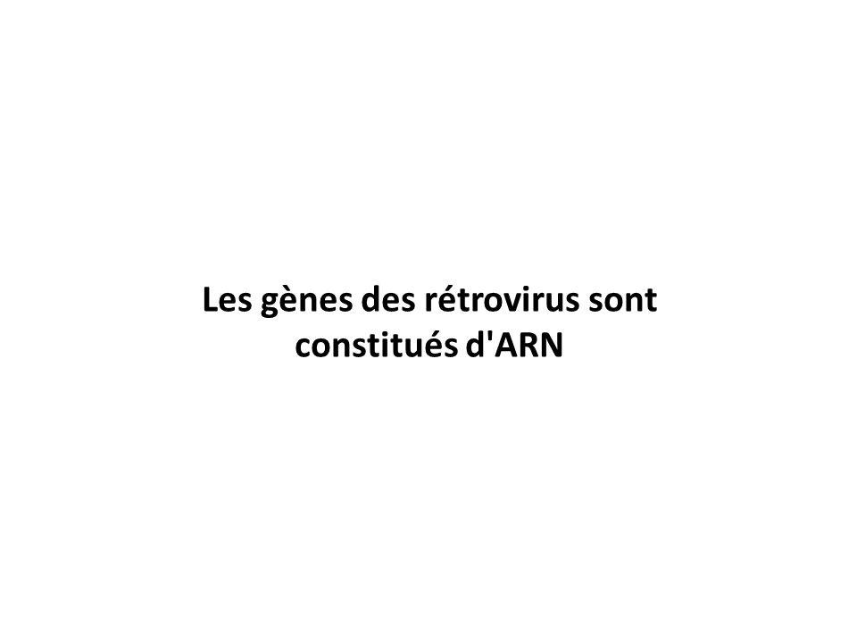Les gènes des rétrovirus sont constitués d'ARN