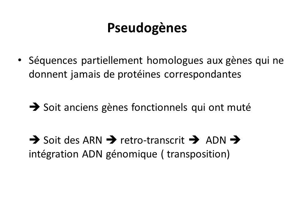 Pseudogènes Séquences partiellement homologues aux gènes qui ne donnent jamais de protéines correspondantes Soit anciens gènes fonctionnels qui ont mu