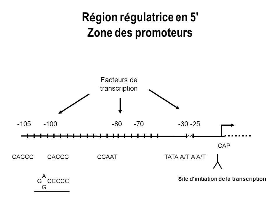 R é gion r é gulatrice en 5' Zone des promoteurs -105-100 CAP -70-80-30 -25 CACCC CCAATTATA A/T A A/T G CCCCC AGAG Facteurs de transcription Site d'in