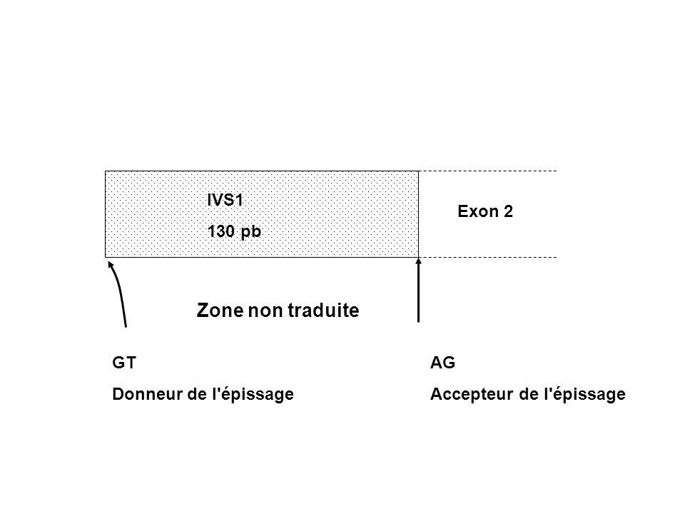 IVS1 130 pb Exon 2 GT Donneur de l'épissage AG Accepteur de l'épissage Zone non traduite