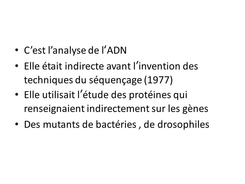 Cest lanalyse de lADN Elle était indirecte avant linvention des techniques du séquençage (1977) Elle utilisait létude des protéines qui renseignaient