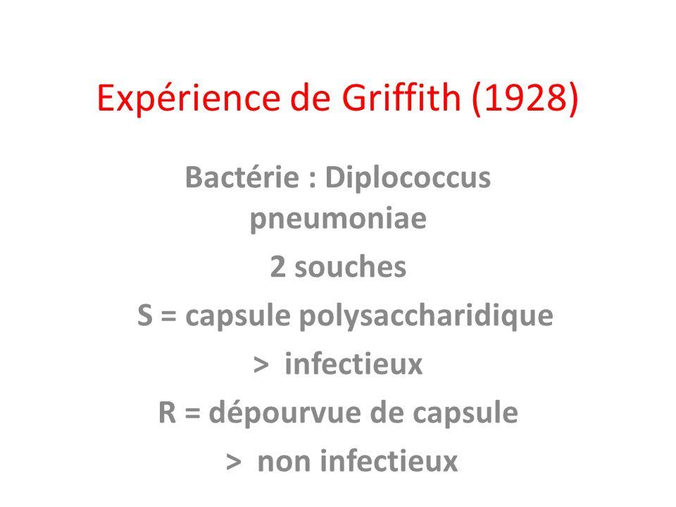 Expérience de Griffith (1928) Bactérie : Diplococcus pneumoniae 2 souches S = capsule polysaccharidique > infectieux R = dépourvue de capsule > non in