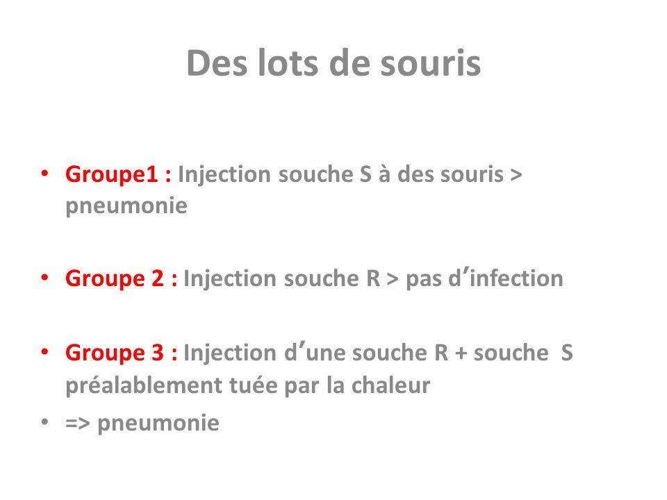 Des lots de souris Groupe1 : Injection souche S à des souris > pneumonie Groupe 2 : Injection souche R > pas dinfection Groupe 3 : Injection dune souc