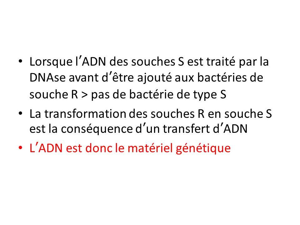 Lorsque lADN des souches S est traité par la DNAse avant dêtre ajouté aux bactéries de souche R > pas de bactérie de type S La transformation des souc